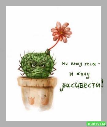 Кактусы в природе фото