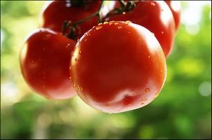 Какие помидоры